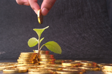 hand of a man putting golden coin in Plant , plant Growing In Savings Coins - Investment And Interest Concept Reklamní fotografie