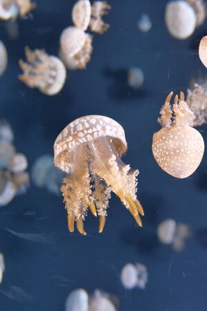 Close up of jelly fish in sea water .