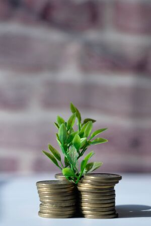 young plant growing with stack of coins Imagens