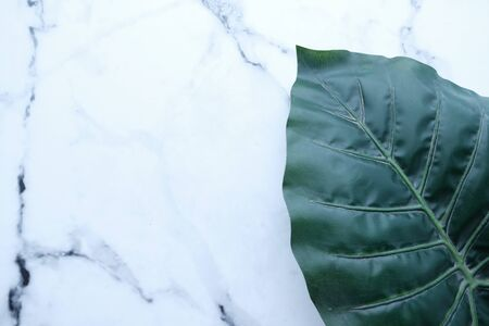 Tropical green leaf on white marble texture abstract background 版權商用圖片 - 144272082