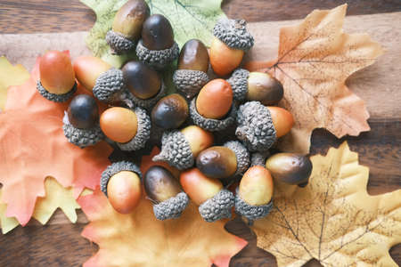autumn maple dried leaves, acorns on table .