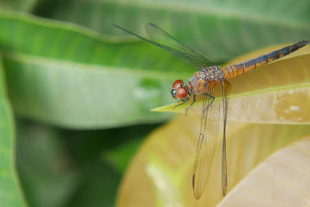 close up of Dragonfly on a plant
