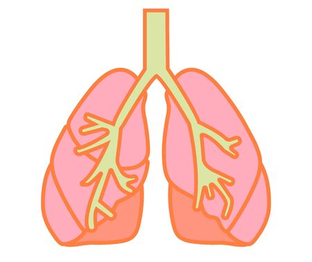 Illustration of simple and healthy lungs and bronchi.