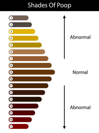 Shades color of poop. Human feces color. Healthy concept. Normal and abnormal value scale. Vector