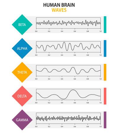 Set of brain waves oscillation. Beta, alpha, theta, delta, gamma brain waves. Human rhythm, types, amplitude of mind waves. Vector illustration