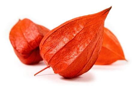 Orange physalis isolated on a white background