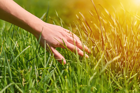 the girls hand stroking the green grass, concept of unity with nature Stock Photo