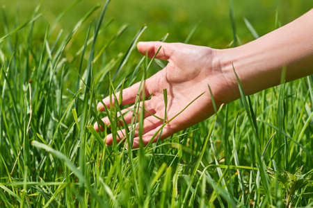 the girls hand stroking the green grass