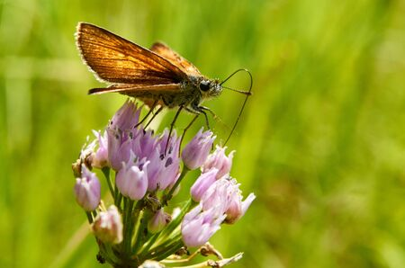 rejoicing: Beautiful butterfly on a flower drinking nectar. Stock Photo