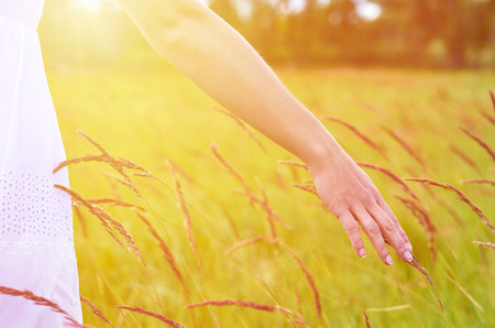 Girl hand stroking spikelets in the field. The concept of freedom and unity with nature.