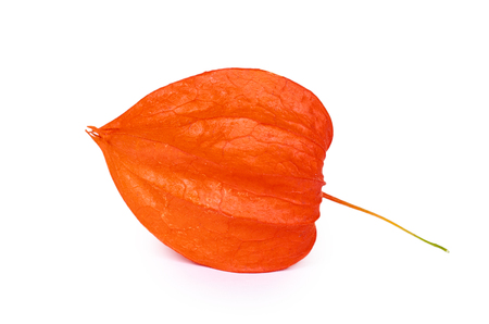exotic fresh orange physalis isolated on white background. Stock Photo