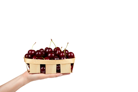Sweet ripe cherry in package with hand isolated on white background, copy space template 写真素材
