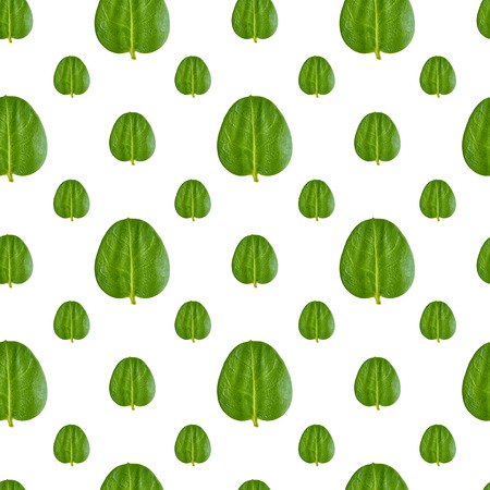 Close up of green leaves seamless pattern background.