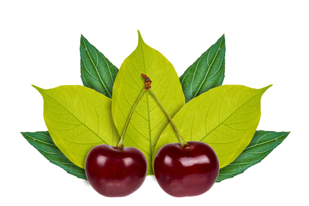 Sweet ripe cherry on the background of green leaves. Isolated on white. concept of natural origin. Stock Photo