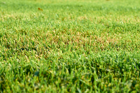 view of a field of green grass, nature background. Stock Photo