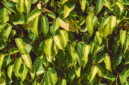macro photo of green leaves, nature texture and background.