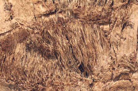 macro photo of brown tree bark, wood texture.