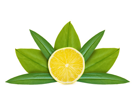 Slice of lemon on the background of green leaves. Isolated on white. concept of natural origin.