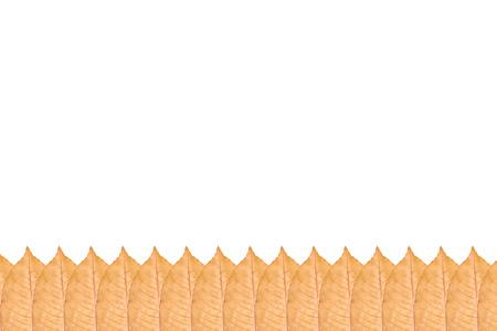 Close up of yellow autumn leaf pattern, background photo. Stock Photo