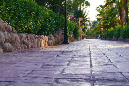 Park alley paved of stone tiles, green palms and bushes along the road.