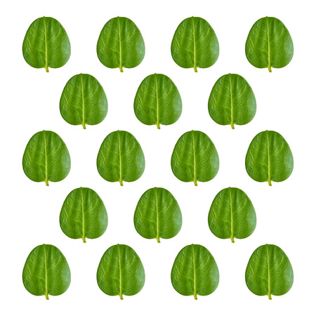 Close up green leaves pattern background photo.
