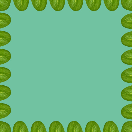 Green leaves background, frame and border, copy space photo. 스톡 콘텐츠 - 110099276