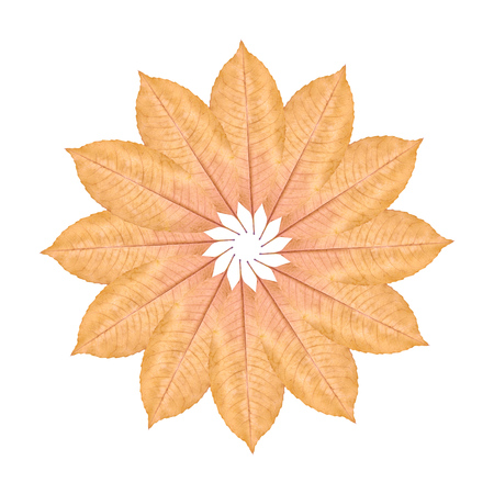 Close up of yellow autumn leaf background, flower composition.