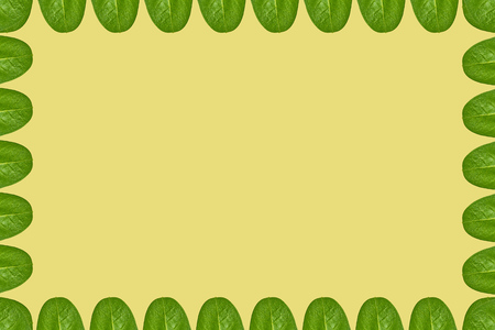 Green leaves background, frame and border, copy space photo. Stock Photo