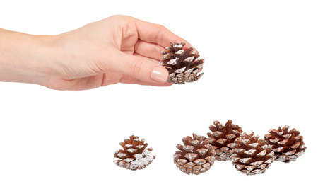 Hand with fir cones, decorations for holidays. Isolated on white Stock Photo