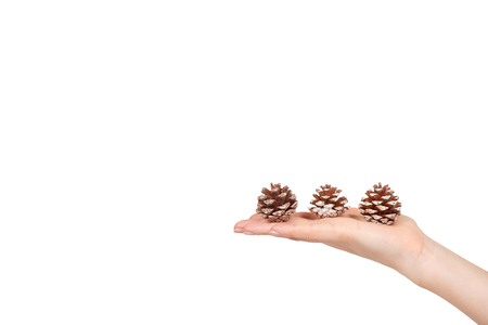 Hand with fir cones, decorations for holidays. Isolated on white. Copy space template