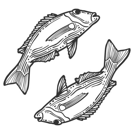 Fish. Vector concept in doodle and sketch style. Hand drawn illustration for printing on T-shirts, postcards.