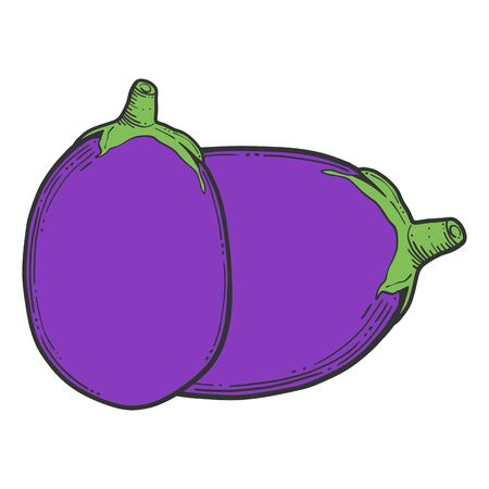 Fresh raw eggplant. Vector concept in doodle and sketch style. Hand drawn illustration for printing on T-shirts, postcards.