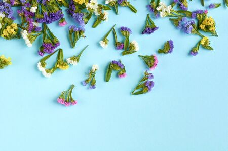 Colored flowers on blue background composition. Flat lay and top view photo