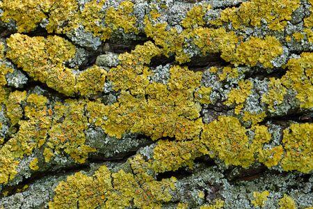 Moss on the tree bark, macro image, texture, wildlife.