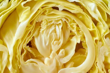 Fresh cabbage leaves macro image. Many layers. Stock Photo