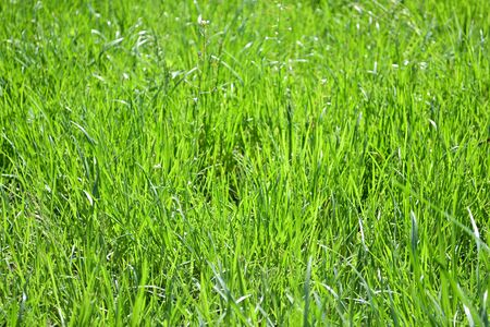 Fresh green grass background, nature backdrop, floral pattern. Stock Photo