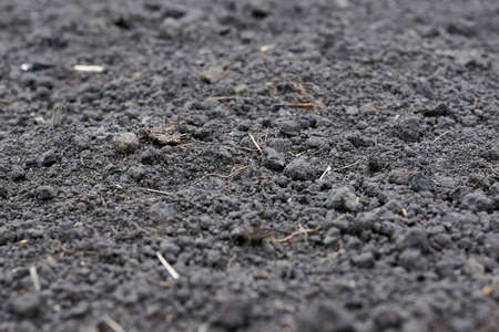 Black soil macro photo, close up image.
