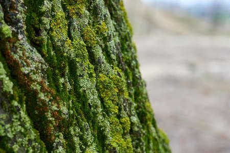 Macro photo of tree bark.