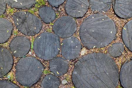 Tree stumps texture and pattern. Zdjęcie Seryjne
