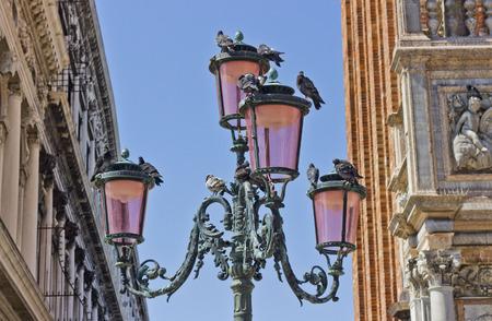 Pigeons on Lantern in Venice