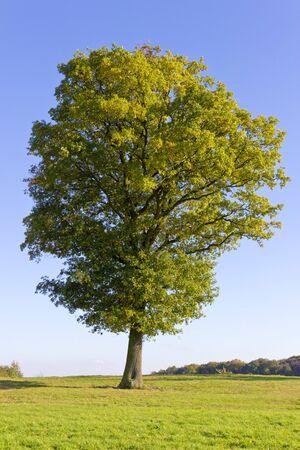 Großer schöner Baum