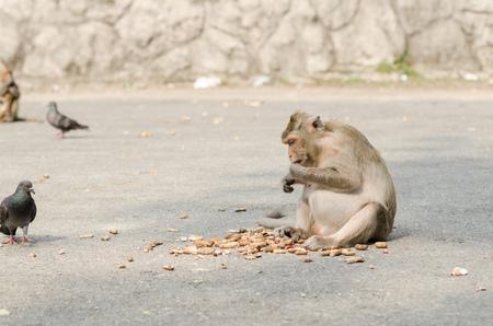 Monkey eating nut Stock Photo