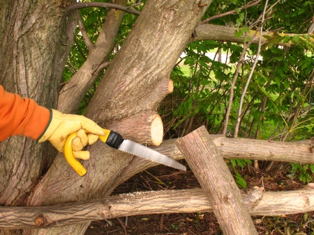 pruning: Pruning