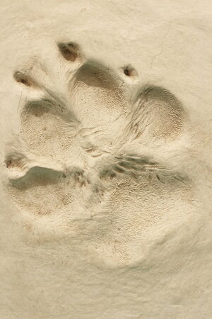 Footprint photo