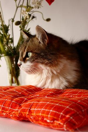 Lovely cat photo