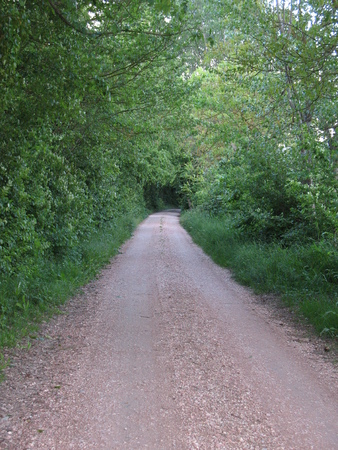 Country lane photo