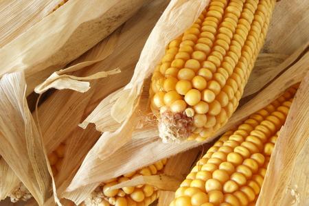 Maize photo
