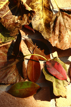 Leaves and bricks photo