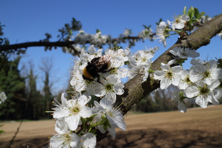pollination: Wonderful pollination in the first days of spring near a river in Italy