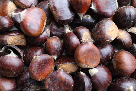 conkers: Chestnuts picked up in wood under their trre Stock Photo